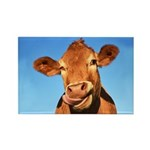 Selfie Cow Rectangle Magnet (10 pack)