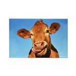 Selfie Cow Rectangle Magnet (100 pack)
