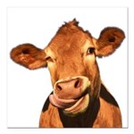 Selfie Cow (Transparent) Square Car Magnet 3