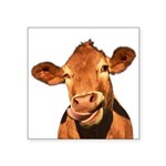 Selfie Cow (Transparent) Square Sticker 3
