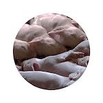 Baby Pigs 3.5