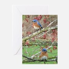 BB4.25x5.5SF Greeting Cards