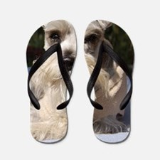 Handsome Mini Schnauzer Flip Flops