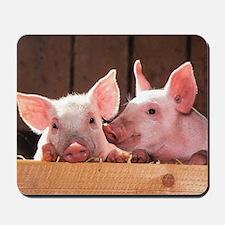 Two Adorable Little Pigs Mousepad