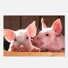Two Adorable Little Pigs Postcards (Package of 8)