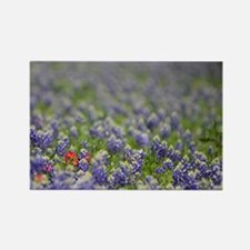 Indian paintbrush Rectangle Magnet