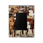 A Herd of Cattle Picture Frame