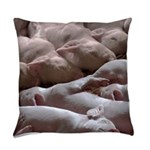 Baby Pigs Everyday Pillow