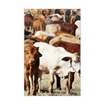 A Herd of Cattle Mini Poster Print