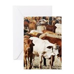 A Herd of Cattle Greeting Card
