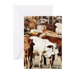 A Herd of Cattle Greeting Cards (Pk of 20)