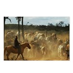 Herding Cattle Postcards (Package of 8)