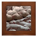 Baby Pigs Framed Tile