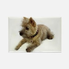 Cairn Terrier Puppy Rectangle Magnet