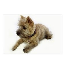 Cairn Terrier Puppy Postcards (Package of 8)