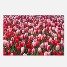 Red and Pink Tulips of Ke Postcards (Package of 8)