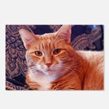 Juba the kitty cat Postcards (Package of 8)