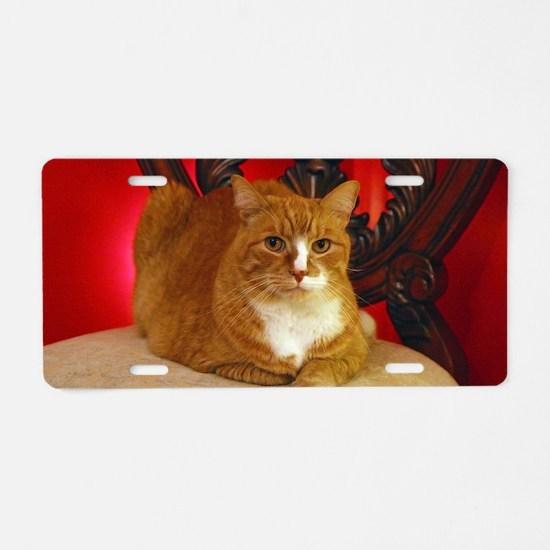 Vanya the cat posing for th Aluminum License Plate