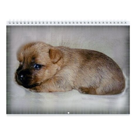 Cairn Terrier Puppy Wall Calendar