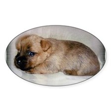 Cairn Terrier Puppy Decal
