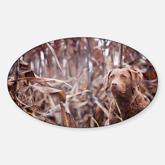 Chesapeake Bay Retriever Decal
