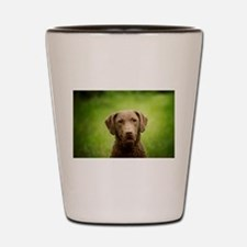 Chesapeake Bay Retriever Shot Glass