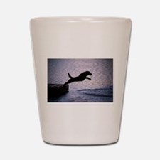 Chesapeake Bay Retriever Leaping In the Shot Glass