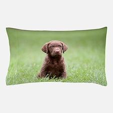 Chesapeake Bay Retriever Puppy Pillow Case