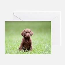 Chesapeake Bay Retriever Puppy Greeting Card