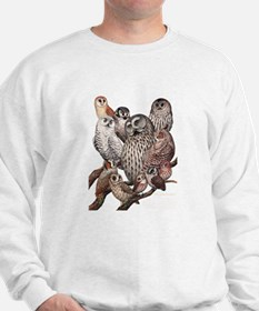 Owls of the Northeast Jumper