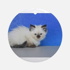 Anna - Seal Point Ragdoll Kitten Round Ornament