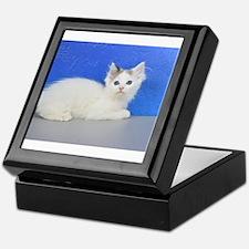 Brett - Seal Van Bicolor Mink Ragdoll Kitten Keeps