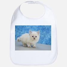 Christmas Carol - Blue Point Ragdoll Kitten Baby B