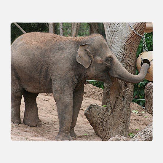 Asian elephant at the zoo Throw Blanket