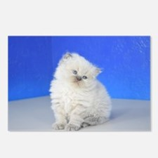 Cleopatra - Blue Point Ragamuffin Kitten Postcards