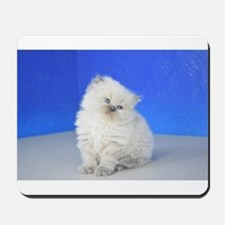 Cleopatra - Blue Point Ragamuffin Kitten Mousepad