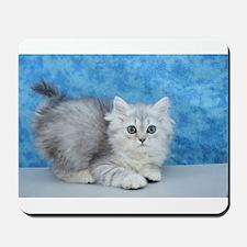 Ella - Silver Tabby Ragamuffin Kitten Mousepad