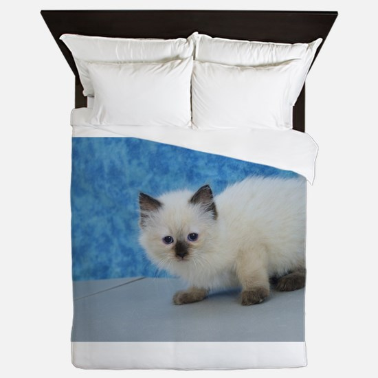 Holly - Seal Point Ragdoll Kitten Queen Duvet