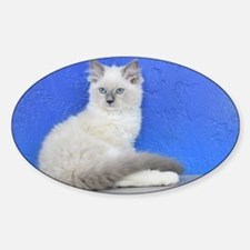 Isabelle - Blue Mitted Ragdoll Kitten Decal