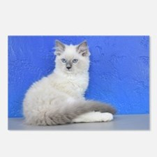 Isabelle - Blue Mitted Ragdoll Kitten Postcards (P