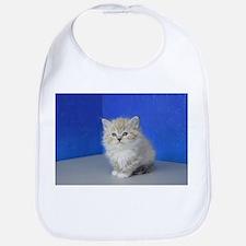 Jenna - Seal Mitted Lynx Mink Ragdoll Kitten Baby