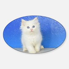 Joseph - Red Bicolor Ragdoll Kitten Decal
