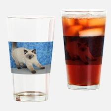 Justine - Seal Point Ragamuffin Kitten Drinking Gl