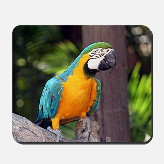 Yellow & blue macaw bird Mousepad