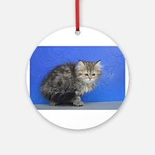 Opal - Silver Golden Tabby Ragamuffin Kitten Round