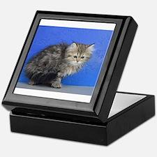 Opal - Silver Golden Tabby Ragamuffin Kitten Keeps
