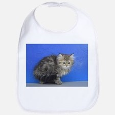 Opal - Silver Golden Tabby Ragamuffin Kitten Baby