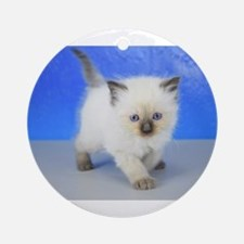 Teddy Bear - Seal Point Ragdoll Kitten Round Ornam