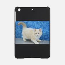 Zane - Lilac Bicolor Lynx Mink Ragdoll Kitten iPad