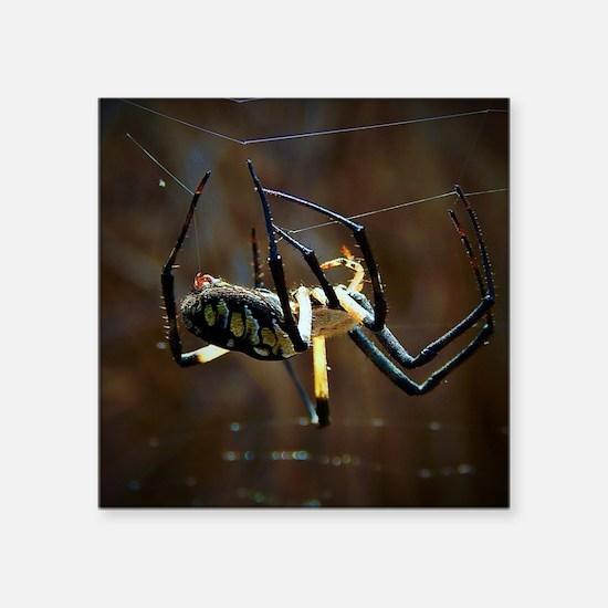 """Funny Spider Square Sticker 3"""" x 3"""""""